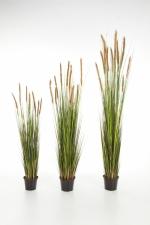 Foxtail grasplant met bruine pluimen 120cm