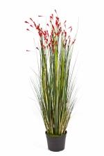 Gras 'bloeiend' koraalrood