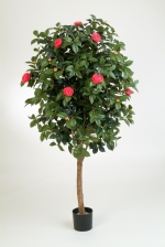 Cameliaboom 170cm Roze