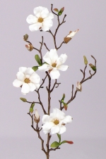 Magnolia fijn wit 75cm