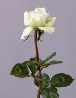 Roos wit/groen 70cm