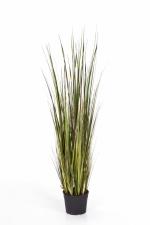 Bamboe gras 120cm