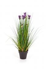 Lavendel Gras 60cm