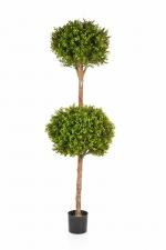 Buxus Double Ball Tree 165cm