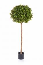 Buxusbol op stam 140cm Ø50cm