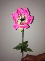 Anemoon roze 53cm - 12 stuks