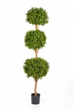 Buxus Triple Ball Tree 190cm