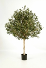 Olijf - Olive tree Natural Topiary 150cm