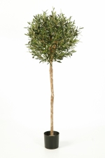 Olijf Bolboom Natural 140cm