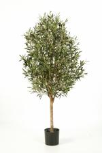 Olijfboom Natural Vine 140cm