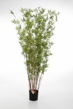 Oriental Bamboe 70cm