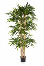 New Giant Bamboe 150cm
