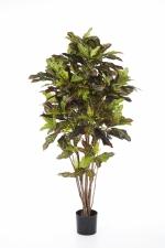 Croton Tree 150cm  brandvertraagd
