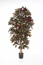 Capensia Bush Tree 150cm