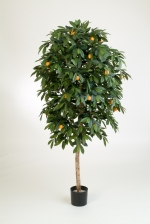 Mandarine Orange Tree 110cm