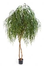 Willow Tree - Treurwilg 240cm