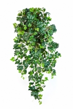 Grape Ivy Hangplant 90cm