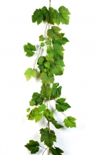 Grape Leaf - Groen Druivenblad 180cm (tijdelijk uiverkocht)
