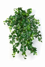 Mini English Ivy 55cm