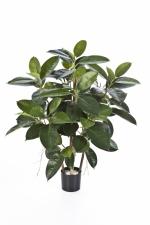 Rubber Plant 90cm