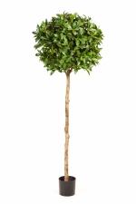 Laurier Bolboom de luxe 140cm brandvertraagd