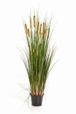 Cattail grass - Kattestaart 120cm