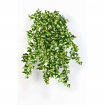 Mini English Ivy 55cm wit groen