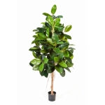 Ficus Elastica groen 180cm