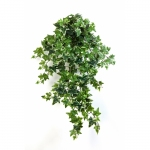 Variegated Ivy Hanging Bush 70cm