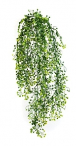 Baby Tear hanging bush 70cm