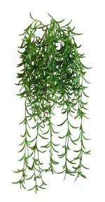 Succulent hangplant 45cm