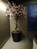 Bloesemboom 240cm