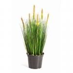 Foxtail grass 60cm