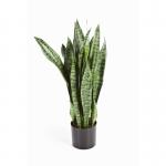 Sanseveria groen 80cm