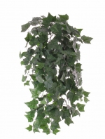 Hedera (English Ivy) 86cm - brandvertragend
