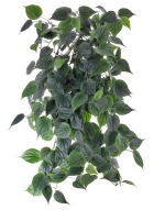 Philodendron giant hanger 80cm - brandvertragend
