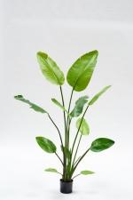 Strelitzia deluxe 150cm