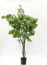 Ficus benjamina deluxe 300cm