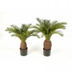 Cycas palm 70cm